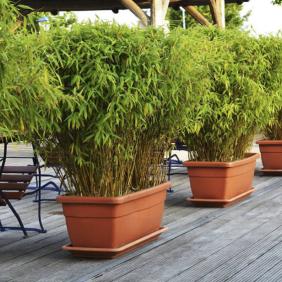 Bambù - https://www.giardinaggio.mobi