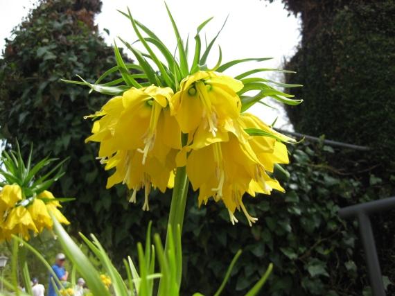 Particolare dell'isola: fiore giallo