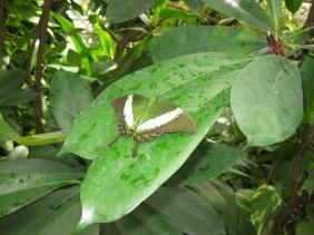 Particolare dell'isola: farfalla