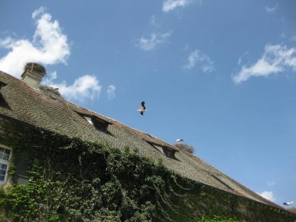 Affenberg Salem: cicogne
