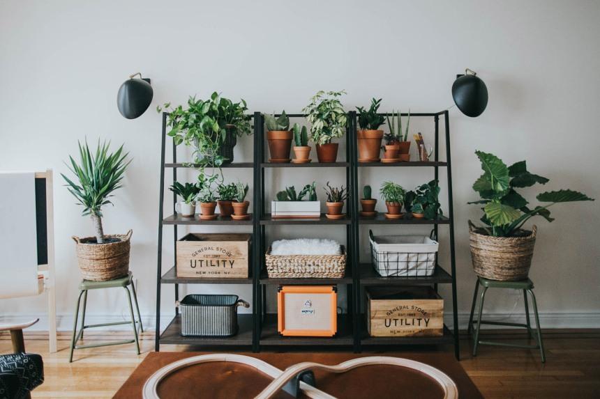 Particolare della scaffalatura in ferro con piante