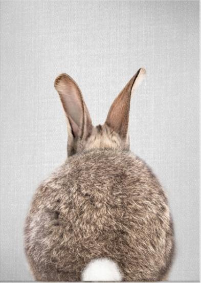 Coniglio retro a colori