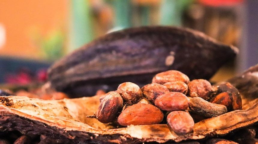 Bacche di cacao